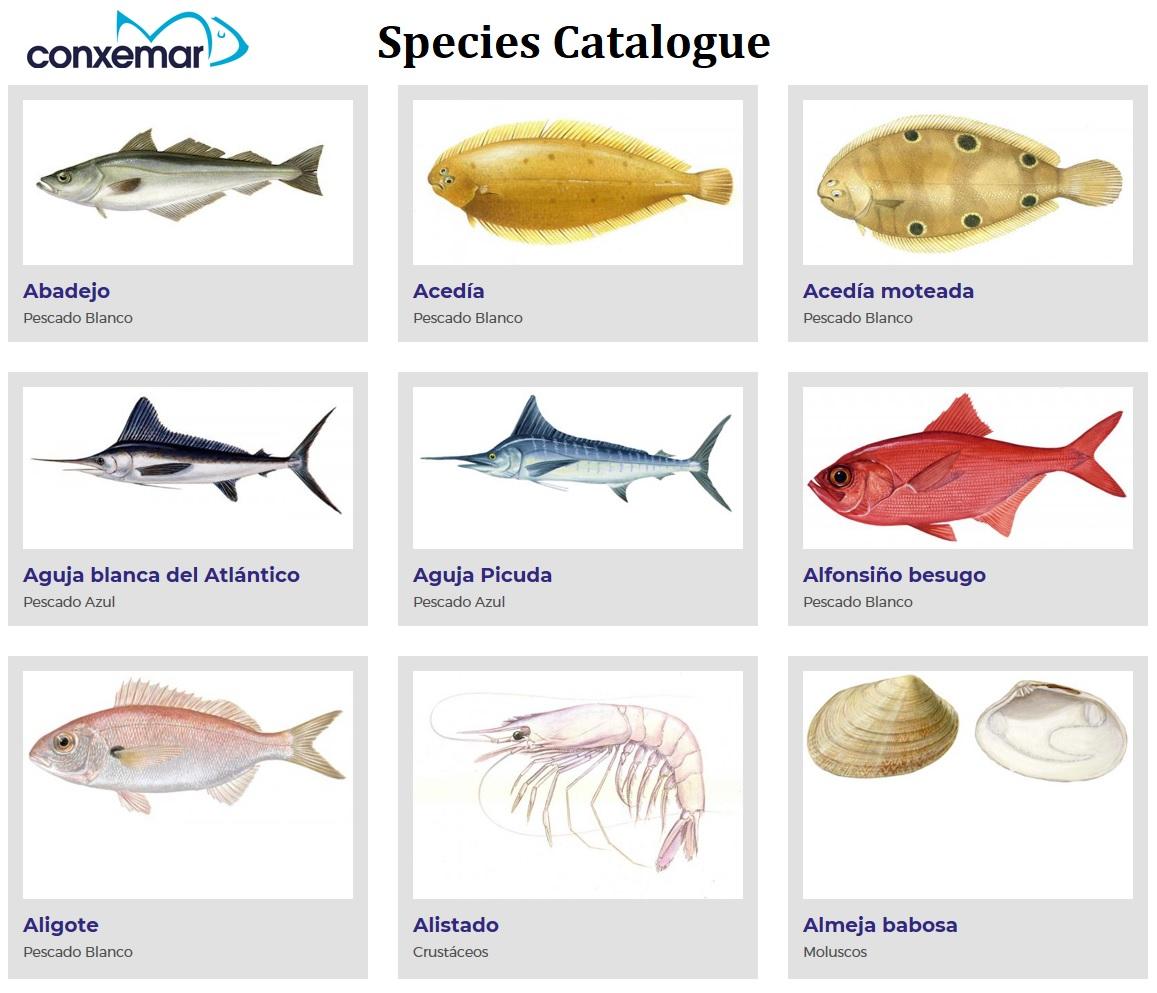 mare catalogue